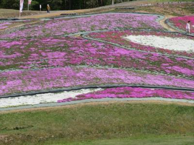 大森リゾート村芝桜フェスティバル
