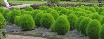 夏の勝沼ハーブ庭園
