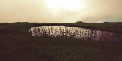 月山8合目の湿原