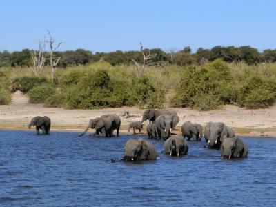 アフリカ南部へ。⑬ボツワナ共和国チョベ国立公園でボートクルーズ! その2