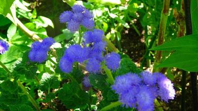ゴンママを伊丹空港へ送った後、西武庫公園の花壇へ花の撮影に行きました(1)