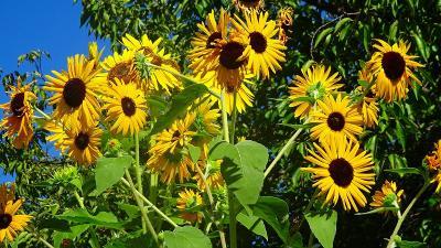 ゴンママを伊丹空港へ送った後、西武庫公園の花壇へ花の撮影に行きました(2)