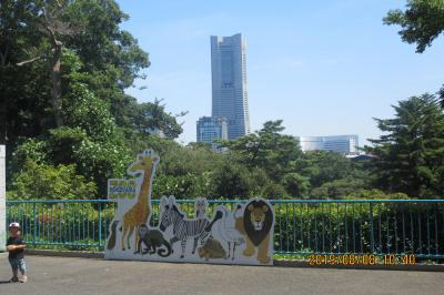 横浜:野毛山動物園 猛暑の一日