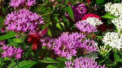 ゴンママを伊丹空港へ送った後、西武庫公園の花壇へ花の撮影に行きました(4)