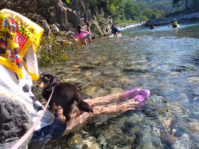 犬と泊まる、付知峡キャンプ場さんけい広場ティピーテント2泊3日の旅