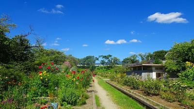 ゴンママを伊丹空港へ送った後、西武庫公園の花壇へ花の撮影に行きました(7)