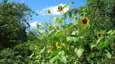 ゴンママを伊丹空港へ送った後、西武庫公園の花壇へ花の撮影に行きました(8)完