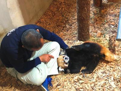 茶臼山動物園 毎夏恒例となったナイトズー訪問!! ロン君とTキーパーさんのふれあいを見れて心が温かくなりました