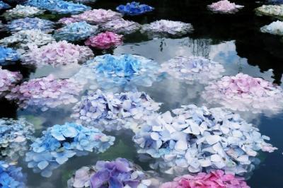 九年ぶりに紫陽花を愛でに〜久安寺・珈琲館サリー編〜