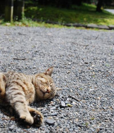 下町で会った猫