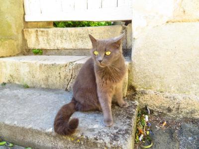 ポアティエ♪サント・ラドゴンド教会に金色の目をした不思議なネコがいた♪2019年5月フランス ロワール地域他8泊10日(個人旅行)167