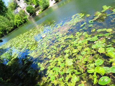 ポアティエを流れるクラン川♪モネの睡蓮はここだった♪ハーブ庭園入場無料♪2019年5月フランス ロワール地域他8泊10日(個人旅行)168
