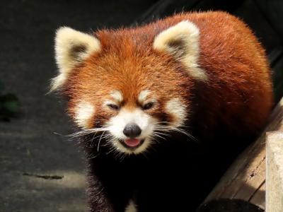 大森山動物園 楽しい仲良し母子のリンゴの争奪!! 通常&ナイターのまんまタイムを満喫しました