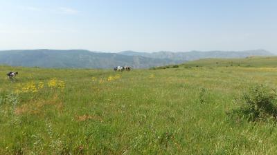アルメニアのお花畑:ゲガマ山麓フラワーハイキング