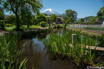 山中湖ロードレース前の観光:忍野八海