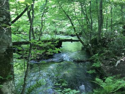 7日間で東北6県ベストハイライトの旅④青森県