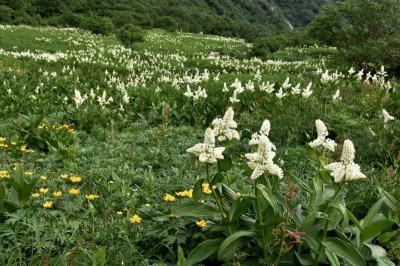 天空のお花畑    千畳敷カールと伊吹山を歩いて