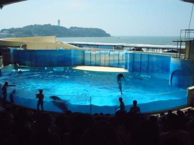 2019年 8月旧盆 江の島・・・・・①新江の島水族館