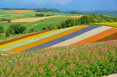北海道旅行・その1<富良野&美瑛で花を巡る>
