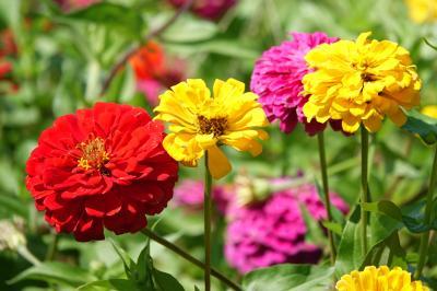 忍野八海と花の都公園へ2019