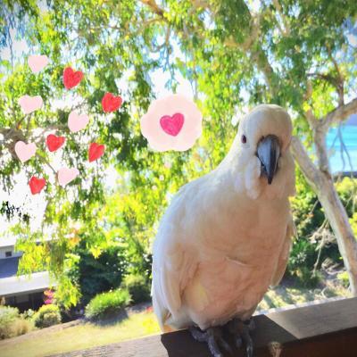 ε(・●・)з 大満喫の真冬のオーストラリア 【2】  (・Θ・). 鳥さん好きのための島だよーハミルトン島