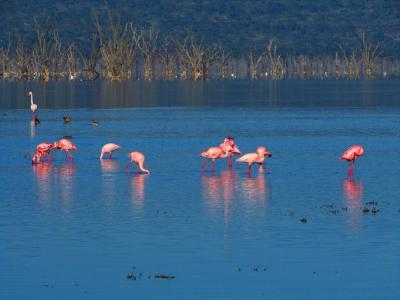 546. Kenyaナクル湖でサファリ [ケニア1回目編Part5]