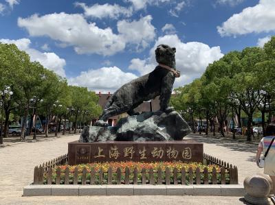 台風一過の青空、上海浦東空港付近の上海野生動物園へ行く