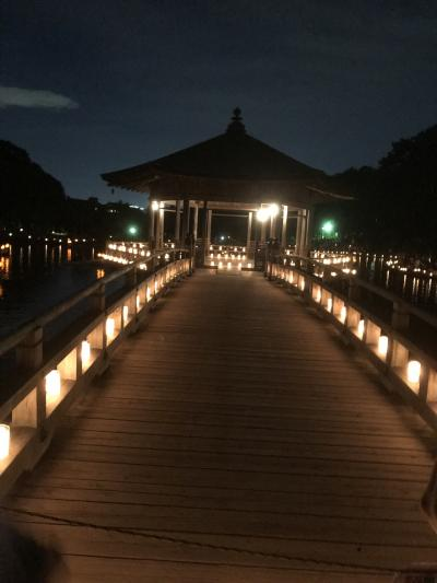 奈良県 ~2019年 なら燈花会の旅~夜編~