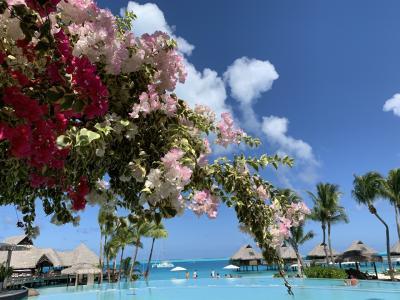 「地上最後の楽園」ボラボラ島の旅7