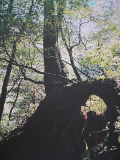 【鹿児島】屋久島へ行ってみた