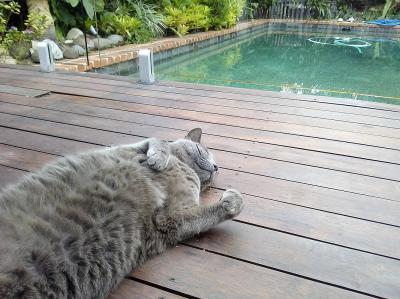 おひとりさま in Cairns2019 ⑥ B&B宿泊編