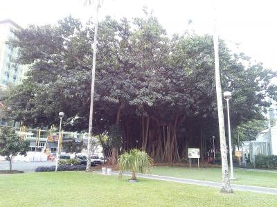 おひとりさま in Cairns2019 ⑦ シティ散策編