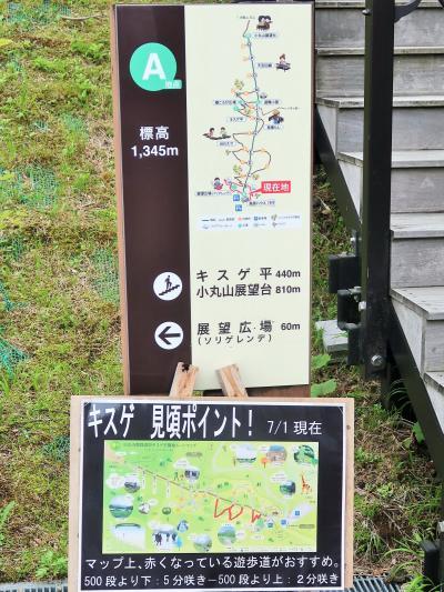 日光-5 霧降高原d キスゲ平園地 花畑=遊歩道 ☆1432m→1345m/霧薄まり花見ごろ