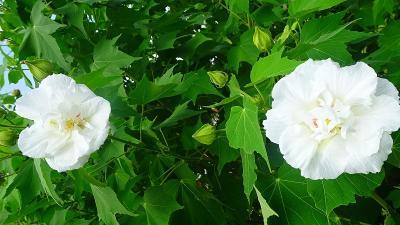 笹原公園・・・防災公園として整備された公園に咲く花 その2。