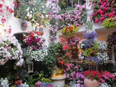 スペイン・アンダルシア 花とシエスタの旅 1 マドリードからコルドバへ パティオ祭り