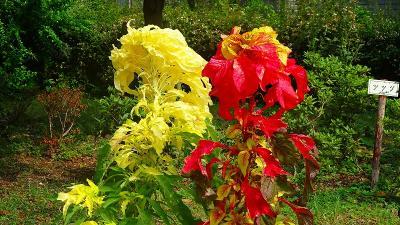 笹原公園・・・防災公園として整備された公園に咲く花 その3。