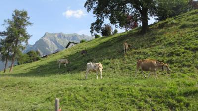 スイス再訪 ホテルステイで美食とハイキング三昧 (1) 関空~アムステルダム~チューリッヒ
