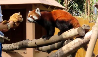 八景島シーパラダイス 進化する放飼場と飼育技術の追求に感銘を受けましたが・・・まさか、朝日君とお別れすることになるなんて・・・