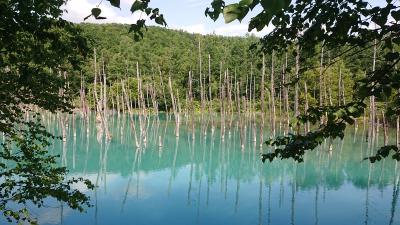 北海道-美瑛・富良野・札幌の夏旅