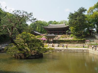2019GWはとうとう韓国ソウル ④ソウル後半は世界遺産の「昌徳宮」「宣陵・靖陵」行って、翌日アッサリと帰国です