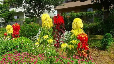 笹原公園・・・防災公園として整備された公園に咲く花 その4。