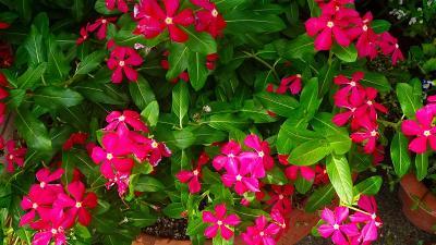 笹原公園・・・防災公園として整備された公園に咲く花 その7完。