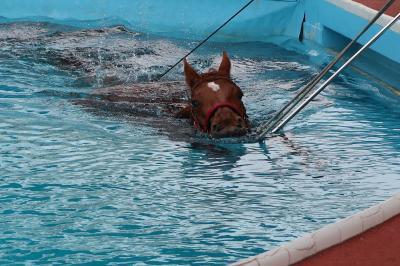 青春18きっぷでいわき湯本温泉へ プールで泳ぐ競走馬を見学し宿で湯ったり
