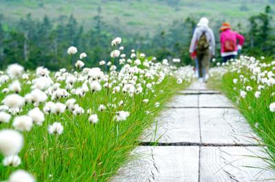 ばばあの気まま一人旅~初夏の秋田~八幡平へ3ヶ月連続で行ってみた!そして旅は終わらない編~