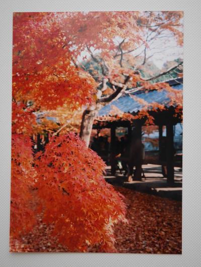 【京都】゜*・紅葉の東福寺・伏見稲荷大社・銀閣寺へ行ってみた・*゜