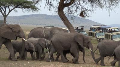 タンザニア4日目 セレンゲティ[後編] 女一人旅