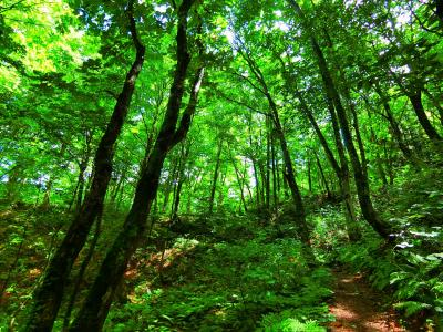 2019年 8月 青森県 世界遺産 白神山地