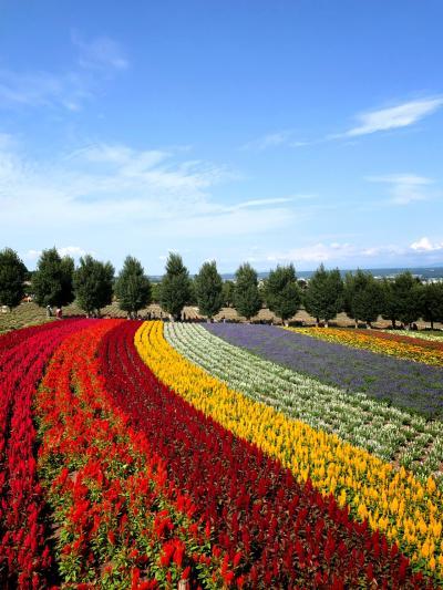 夏休み北海道3泊4日札幌、富良野、美瑛、旭川、小樽の旅