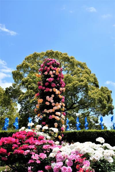 2019年5月横浜ローズウィーク1