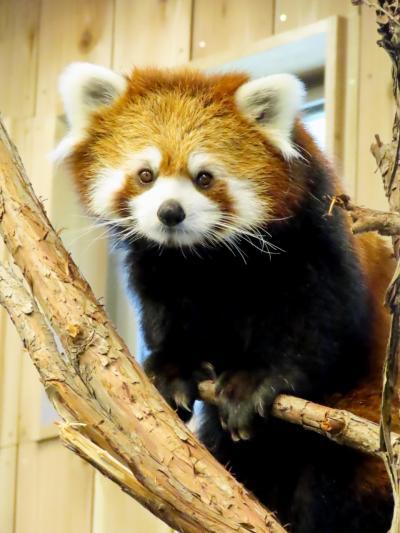 伊豆シャボテン動物公園&楽寿園  来年に期待?展示復帰していたコナツちゃん@シャボテン  ちょうどリンゴタイムに行けました@楽寿園